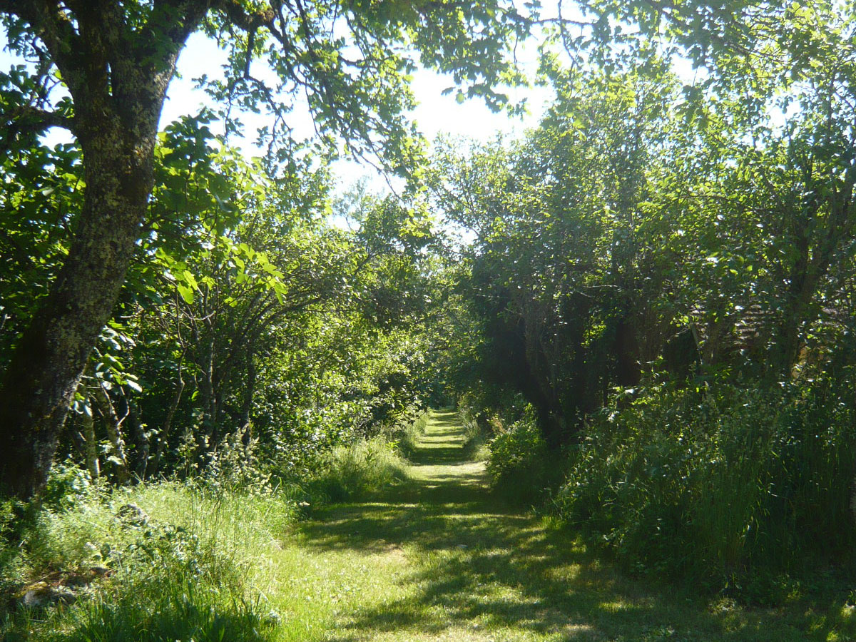 Chemin sous les pruniers